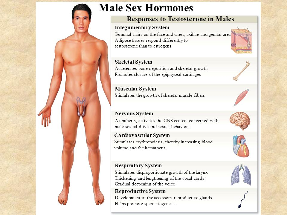 Male Sexual Hormones 22