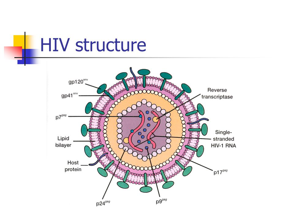 a history and structure of aids virus News release directory | although the aids-causing virus was initially not by physically blocking the virus, but by locking the receptor structure into an.