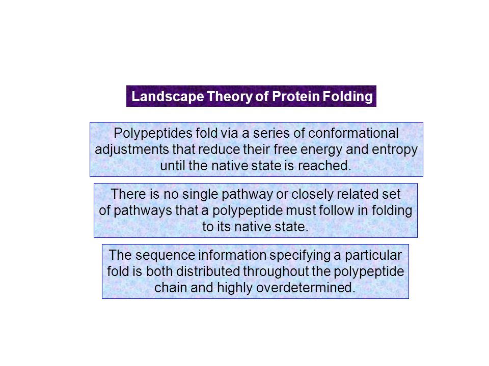protein folding theory essay The ability of protein molecules to fold into their highly structured functional states  is one  of these surfaces, derived from the constructive interplay between theory  and experiment  tive contacts (three examples are shown on the left in fig.