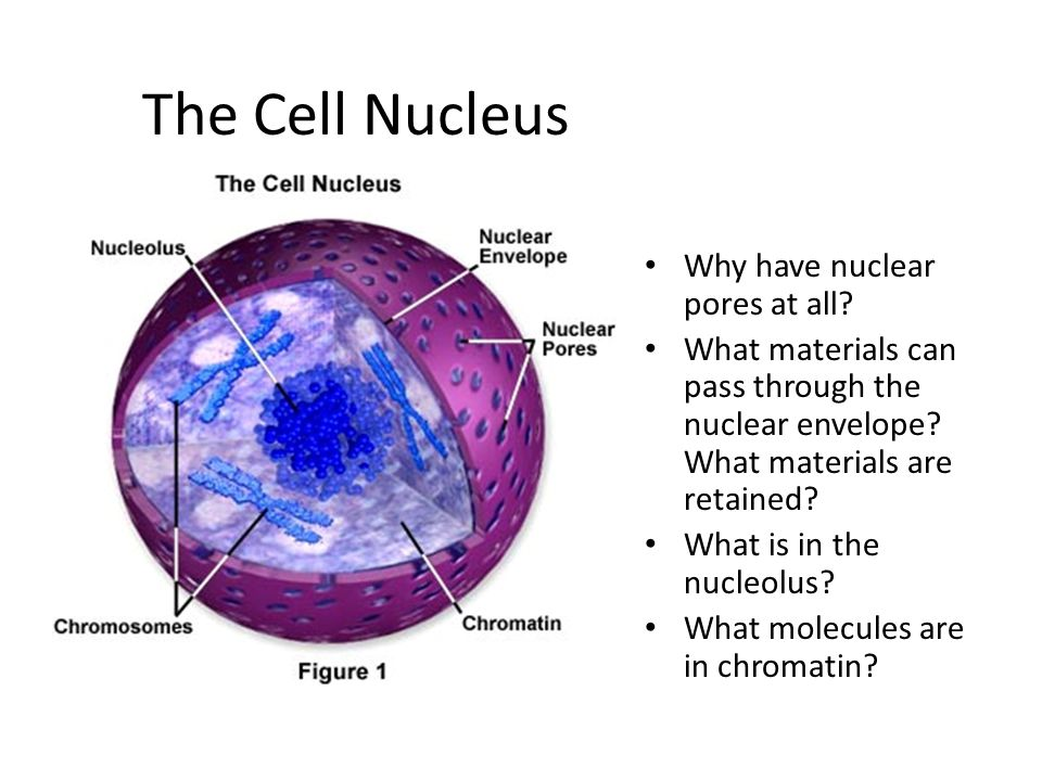 cell structure & function - ppt video online download, Human Body