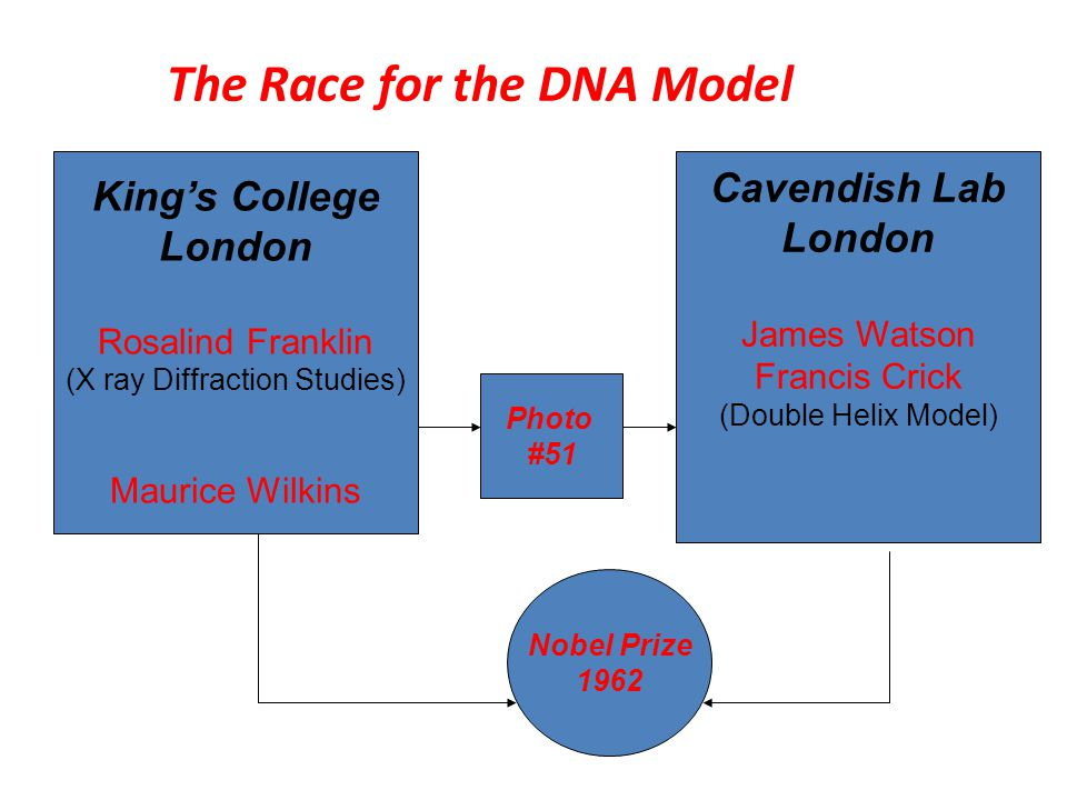 race for the double helix an analysis Read this full essay on race for the double helix: an analysis 1 what were your  first impressions of the main characters james watson: he can be seen as.