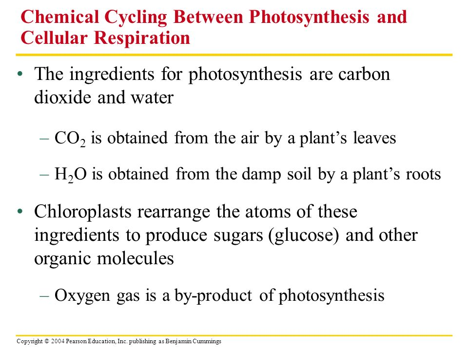 Chemical Cycling Between Photosynthesis and Cellular Respiration
