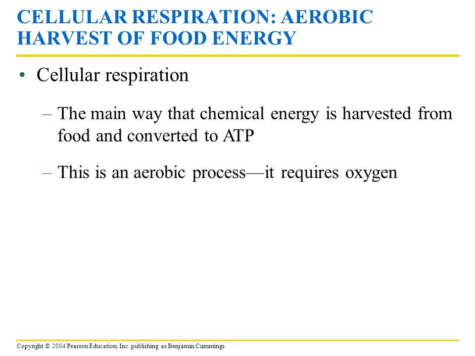 CELLULAR RESPIRATION: AEROBIC HARVEST OF FOOD ENERGY