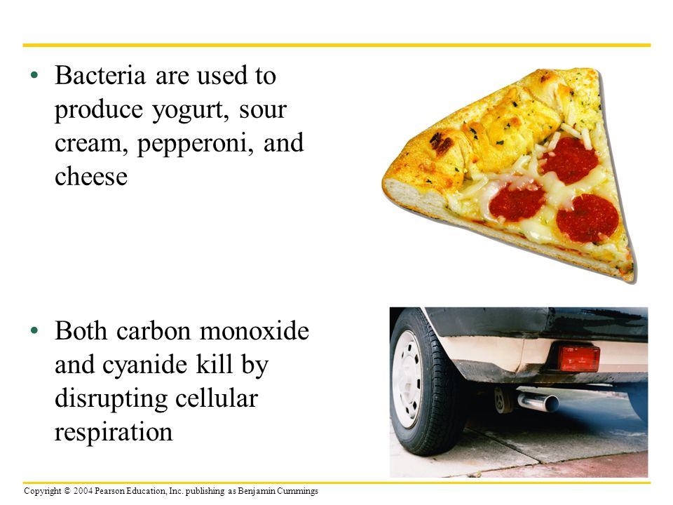 Bacteria are used to produce yogurt, sour cream, pepperoni, and cheese
