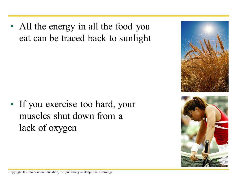 All the energy in all the food you eat can be traced back to sunlight