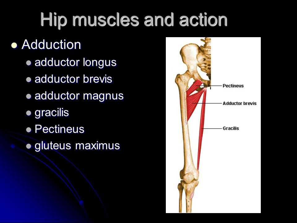 Illiopsoas And Adductor Strains Of The Hip Ppt Video Online Download