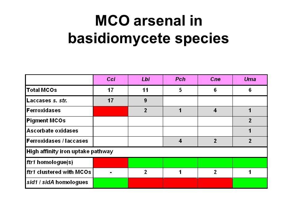 MCO arsenal in basidiomycete species