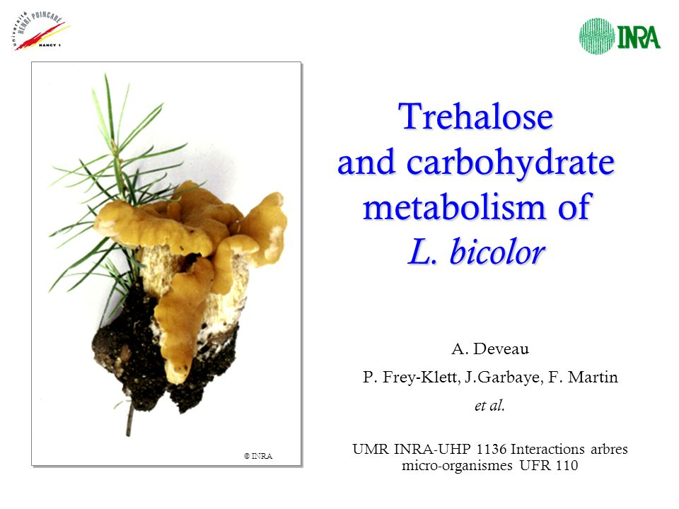 Trehalose and carbohydrate metabolism of L. bicolor