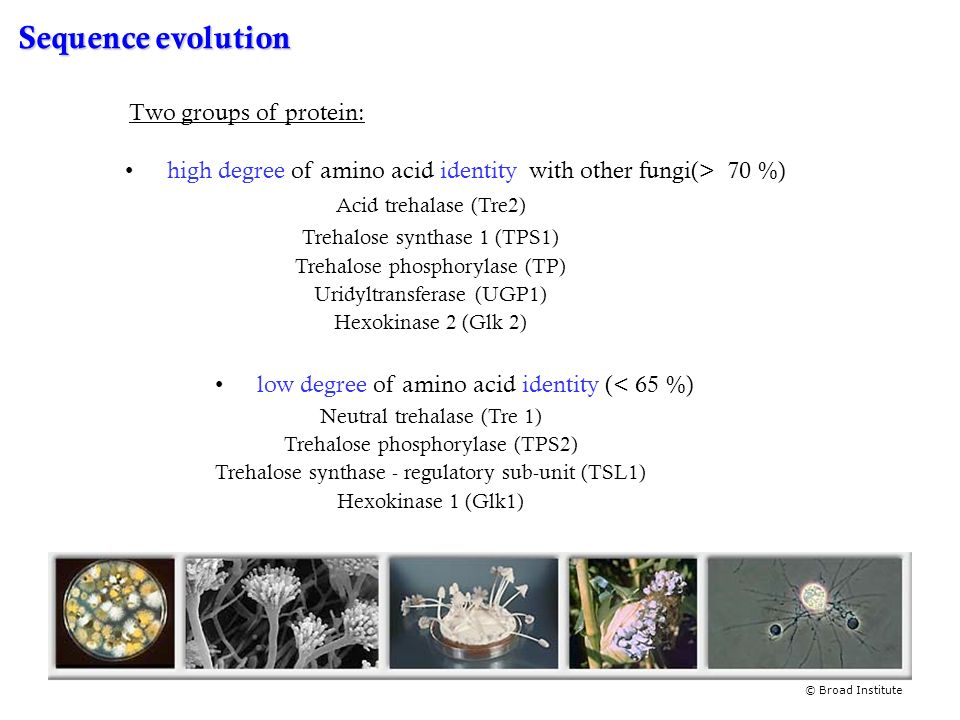 Sequence evolution Two groups of protein: