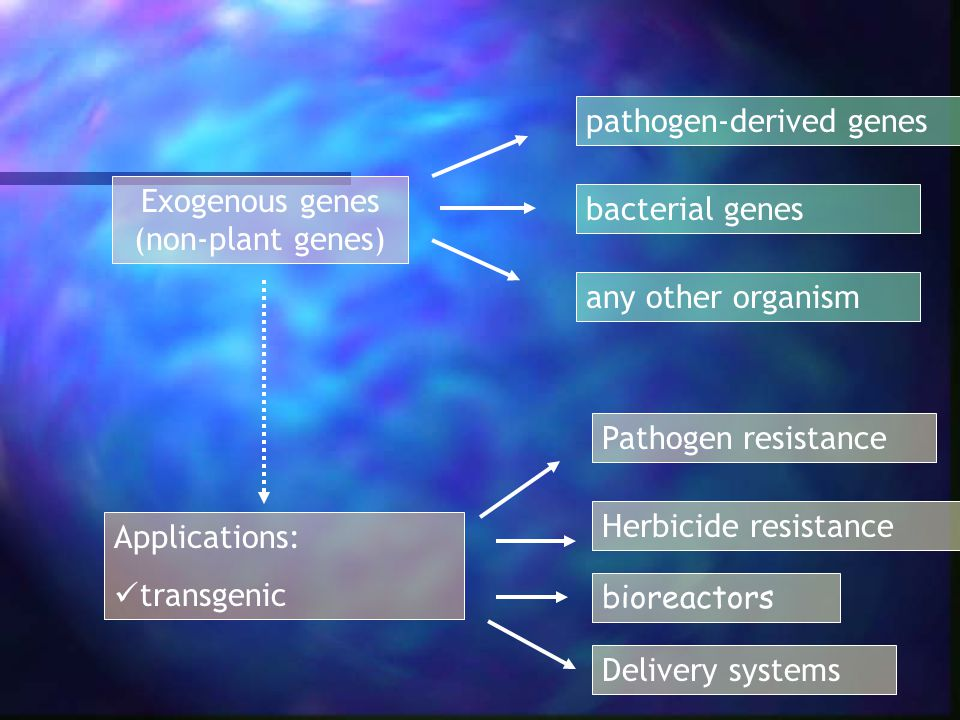 gene manipulation essay Genetic manipulation has the potential to multi- ply medical errors exponentially -- sending ripples that radiate far beyond the finite lifetimes of gene therapist or consenting patient to tamper with the future in that manner is extremely dangerous and unethical by many standards nevertheless, germ-line therapy has.