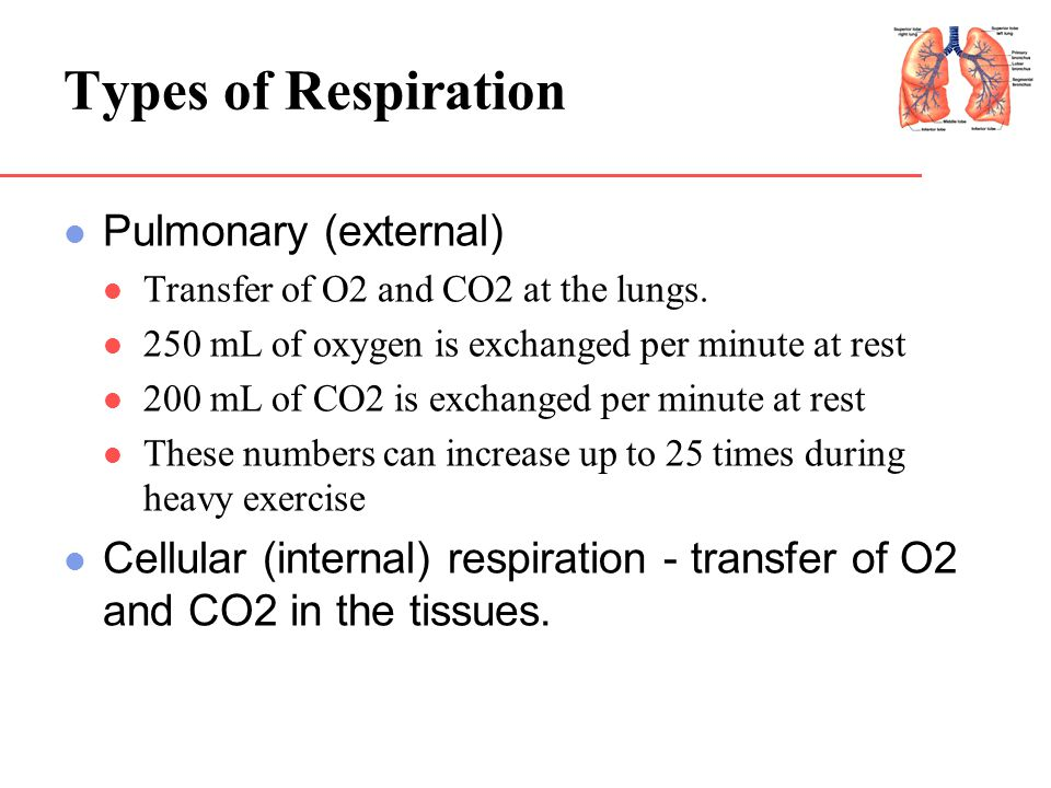 Types of Respiration Pulmonary (external)