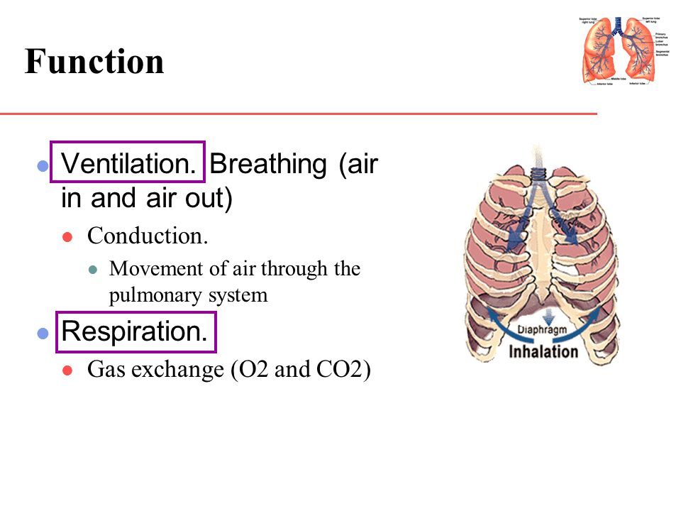 Function Ventilation. Breathing (air in and air out) Respiration.