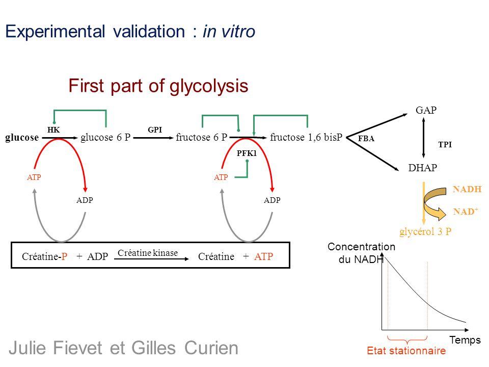 Experimental validation : in vitro