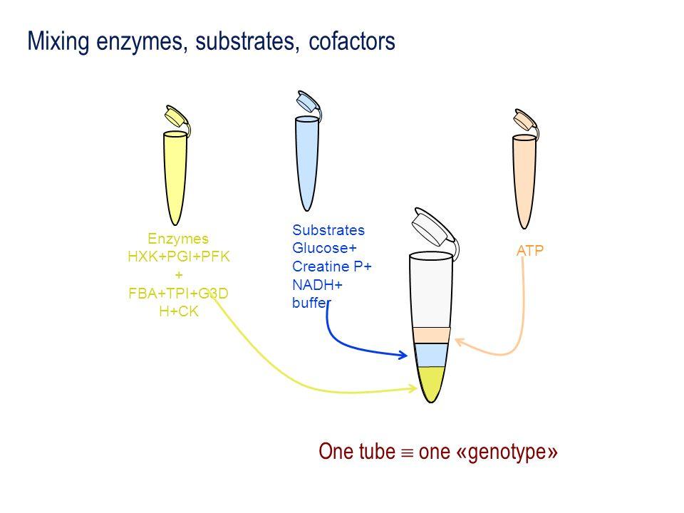 One tube  one «genotype»