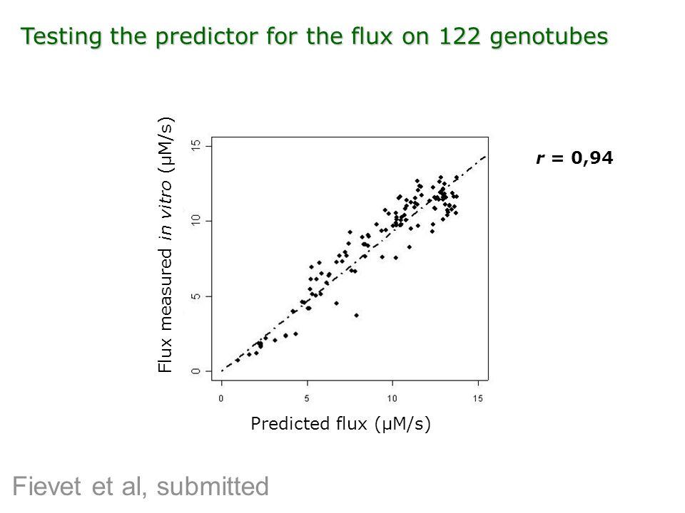 Flux measured in vitro (µM/s)