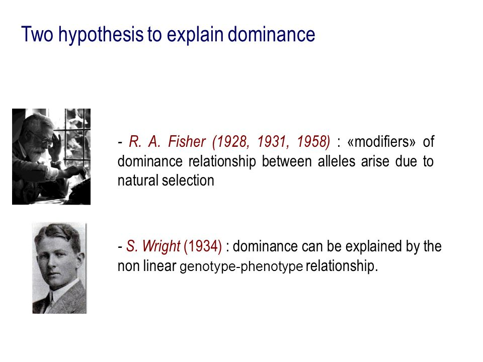 Two hypothesis to explain dominance