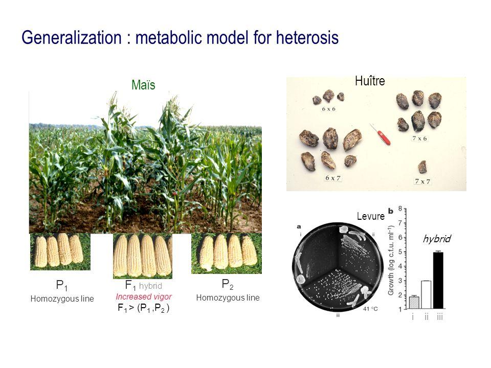 Generalization : metabolic model for heterosis