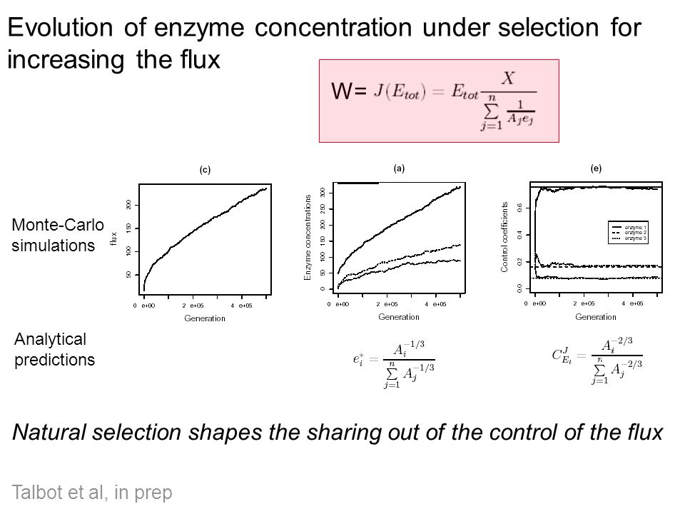 Evolution of enzyme concentration under selection for increasing the flux