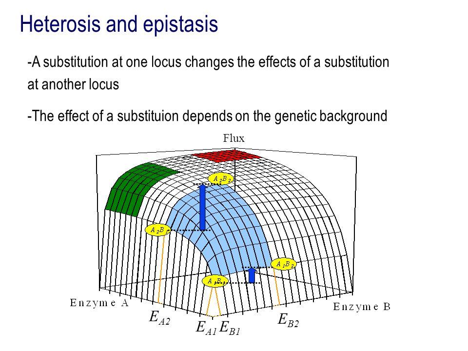 Heterosis and epistasis