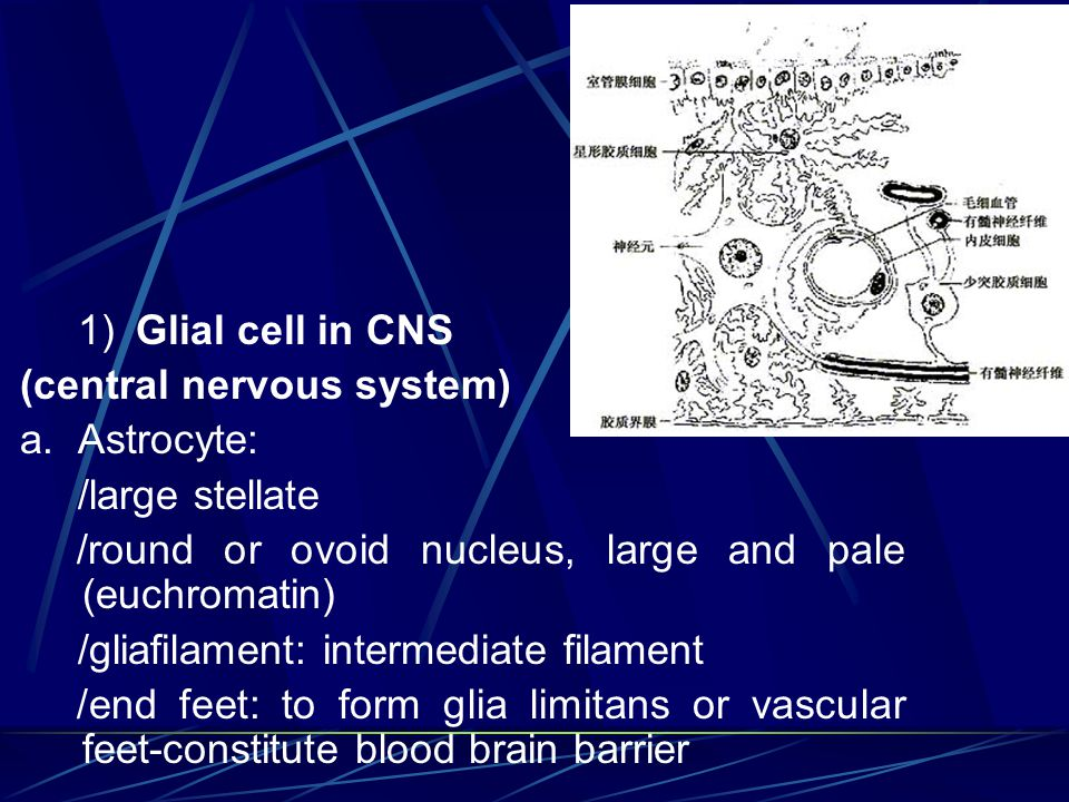 Chapter 7 Nervous tissue - ppt video online download