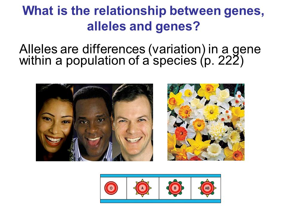 what is the relationship between chromosomes genes alleles and characteristics
