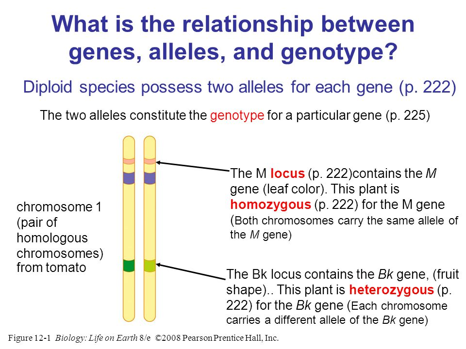 epistatic relationship between genes and alleles