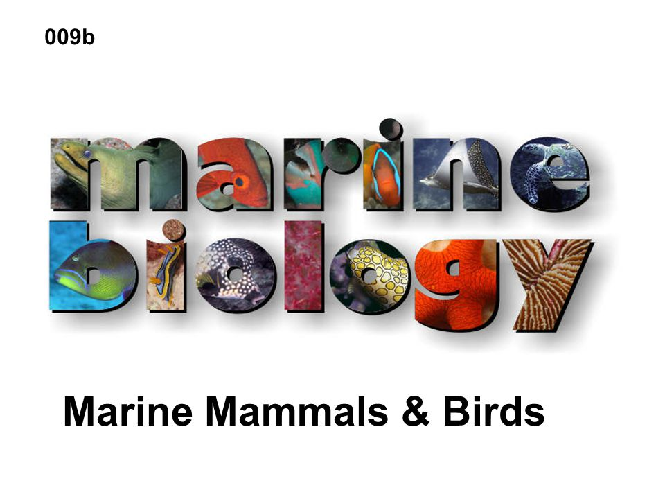 009b Marine Mammals & Birds