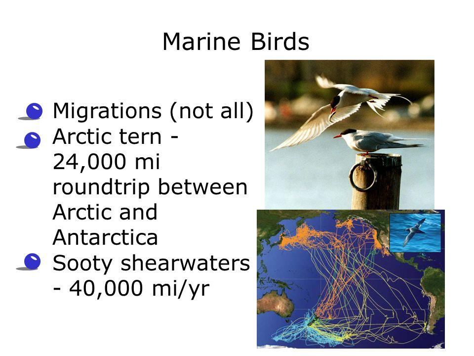 Marine Birds Migrations (not all)