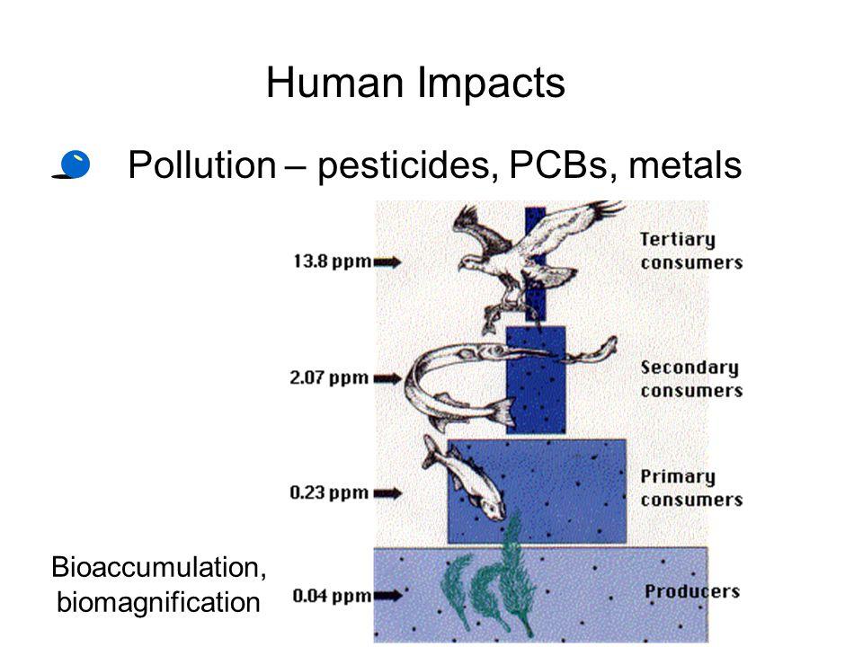 Human Impacts Pollution – pesticides, PCBs, metals Bioaccumulation,