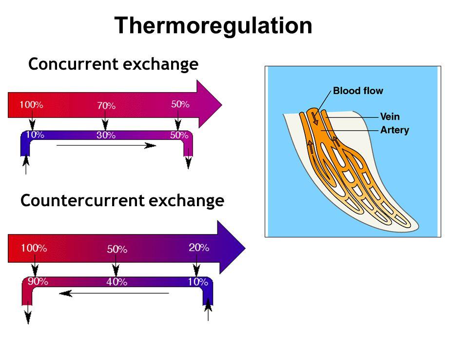 Thermoregulation Concurrent exchange Countercurrent exchange