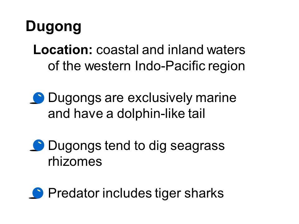 Dugong Location: coastal and inland waters of the western Indo-Pacific region. Dugongs are exclusively marine and have a dolphin-like tail.