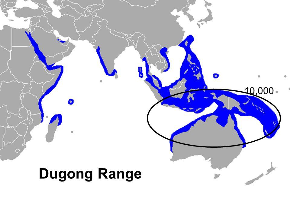 10,000 Dugong Range