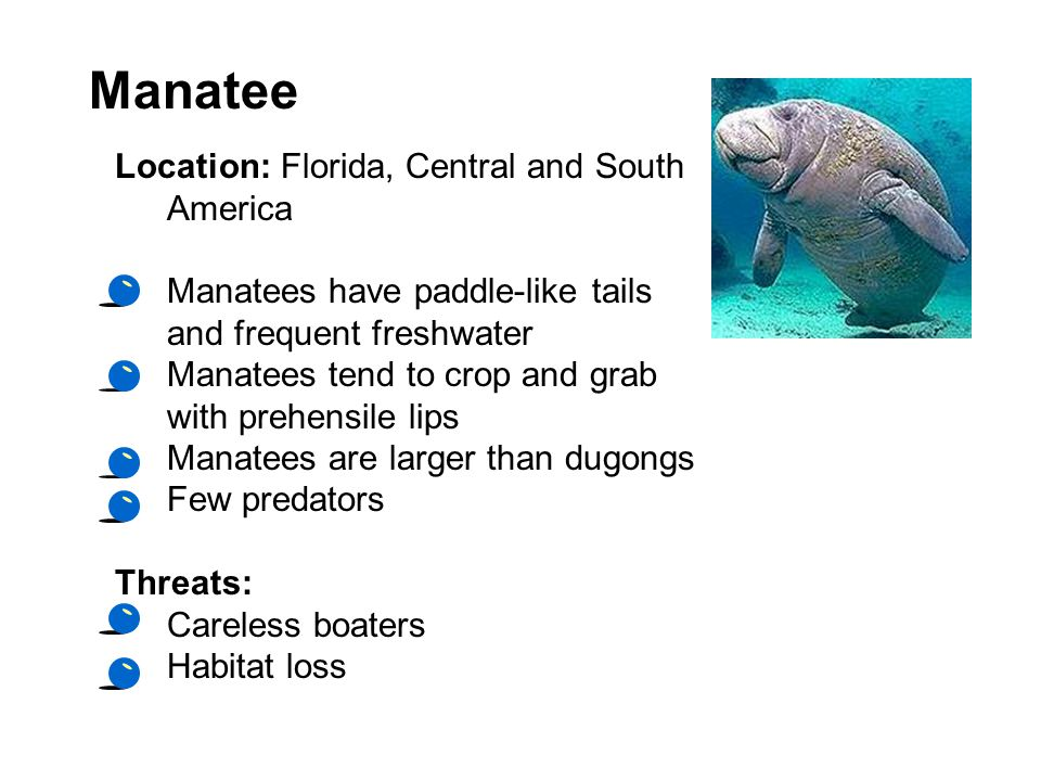 Manatee Location: Florida, Central and South America