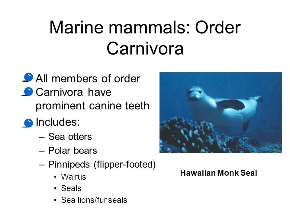 Marine mammals: Order Carnivora