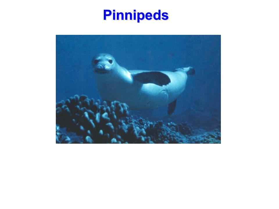 Pinnipeds
