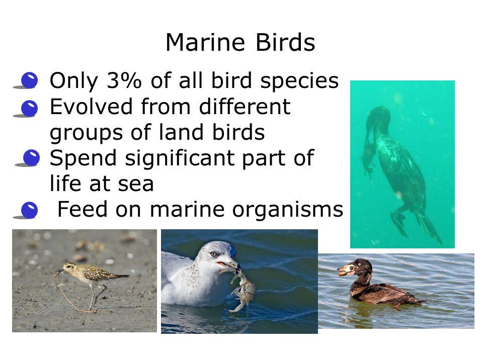 Marine Birds Only 3% of all bird species
