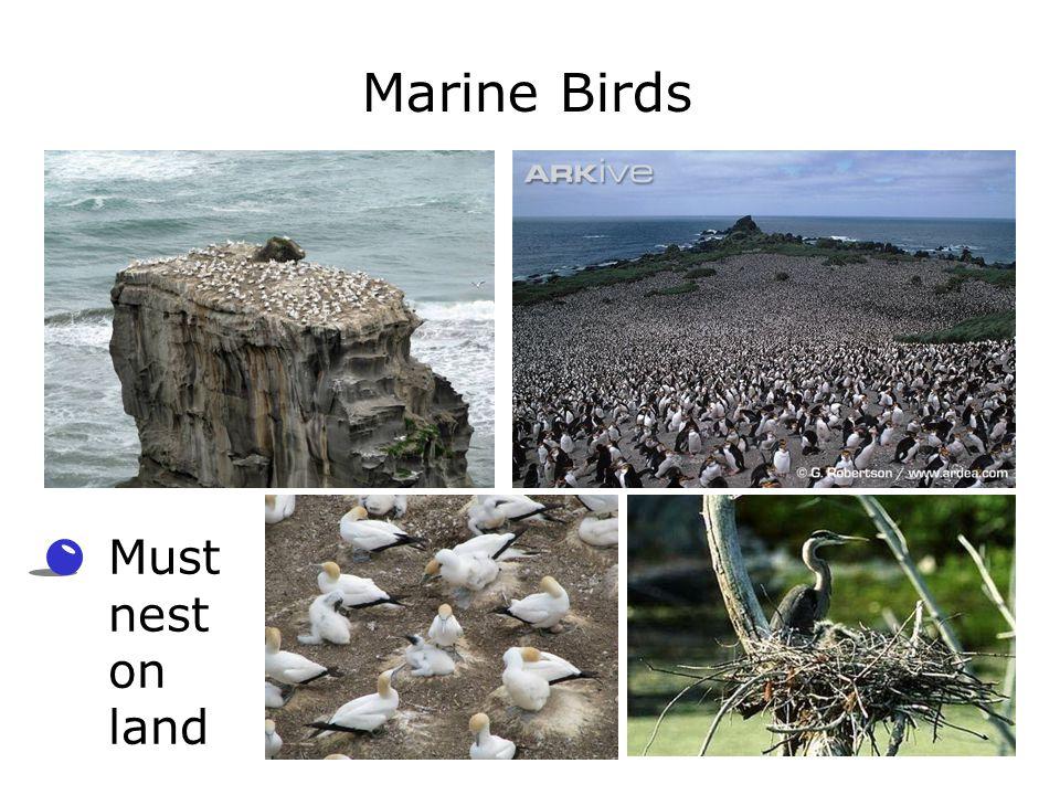 Marine Birds Must nest on land