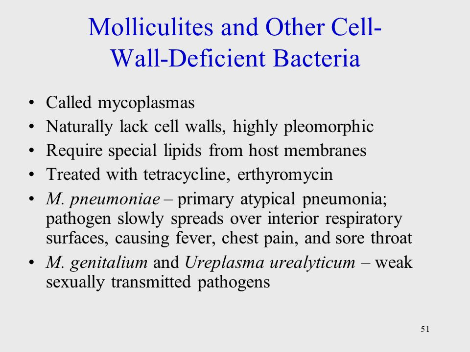 Molliculites and Other Cell- Wall-Deficient Bacteria