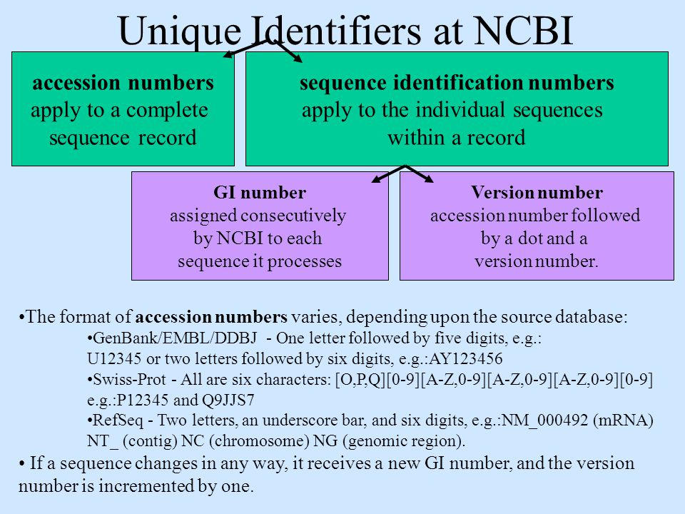 how to download nr database from ncbi