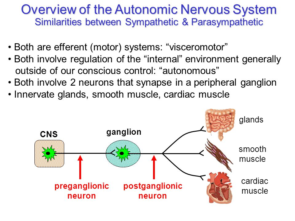 the general effects of massage on the autonomic nervous system Unit 6 - nervous system / special senses the autonomic nervous system helps us to control automatic or isolates the brain from the general.