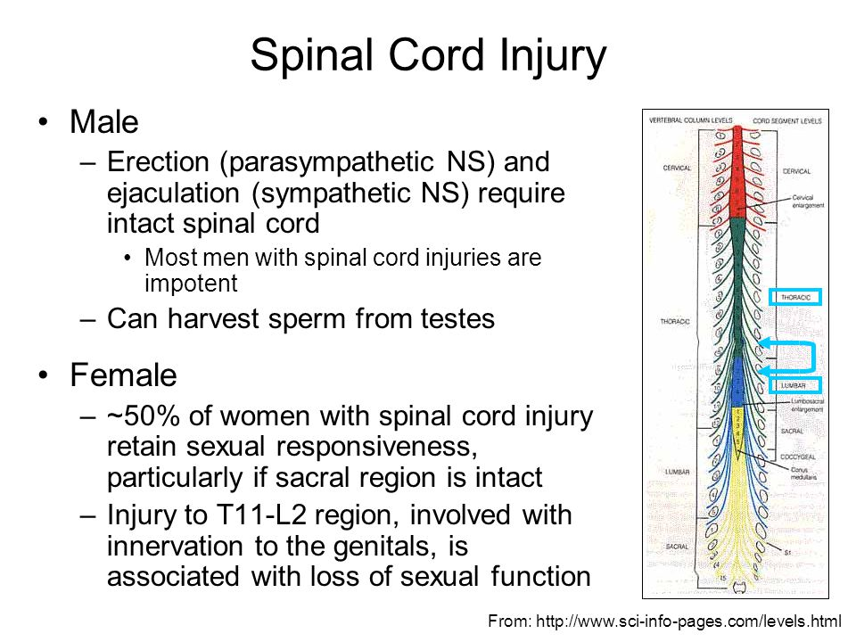 Spinal Cord Injury Sexuality
