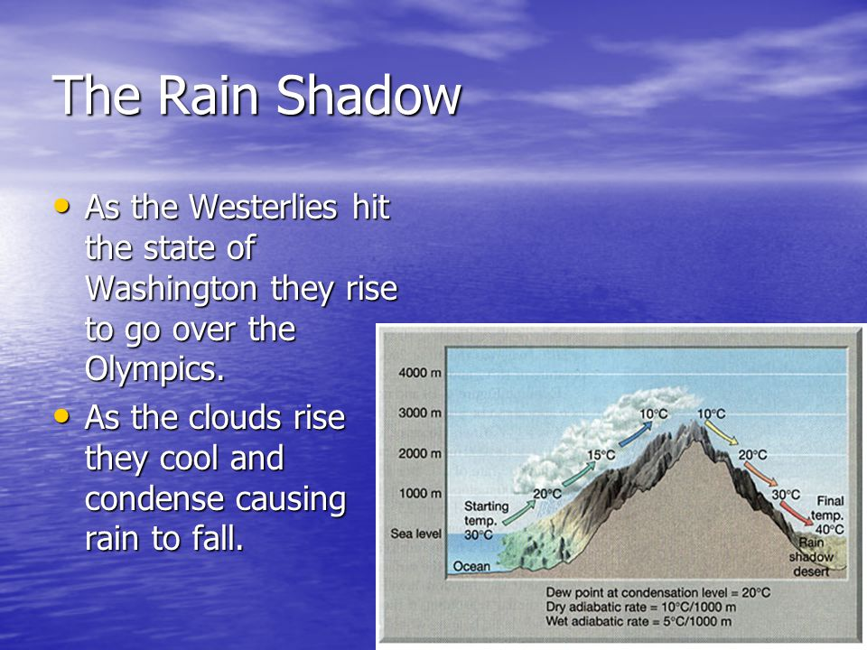 The Rain Shadow As the Westerlies hit the state of Washington they rise to go over the Olympics.