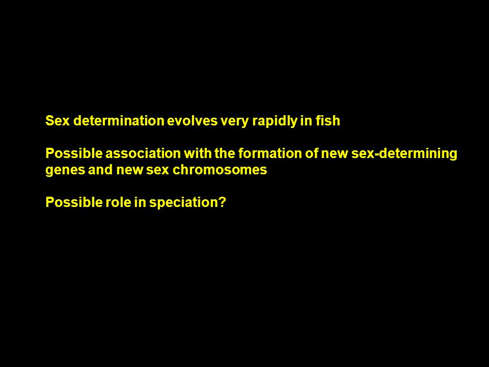 Sex determination evolves very rapidly in fish