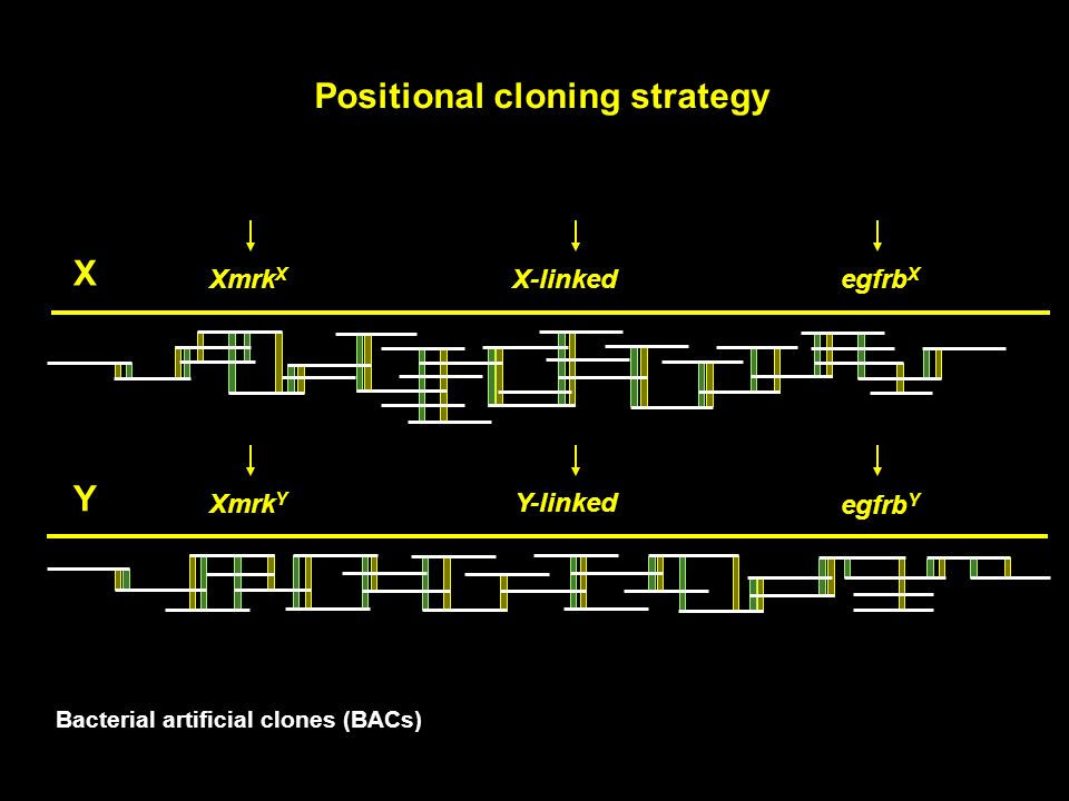 Positional cloning strategy