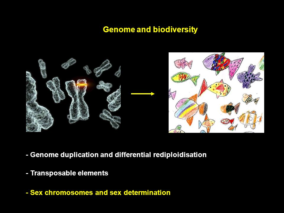 Genome and biodiversity