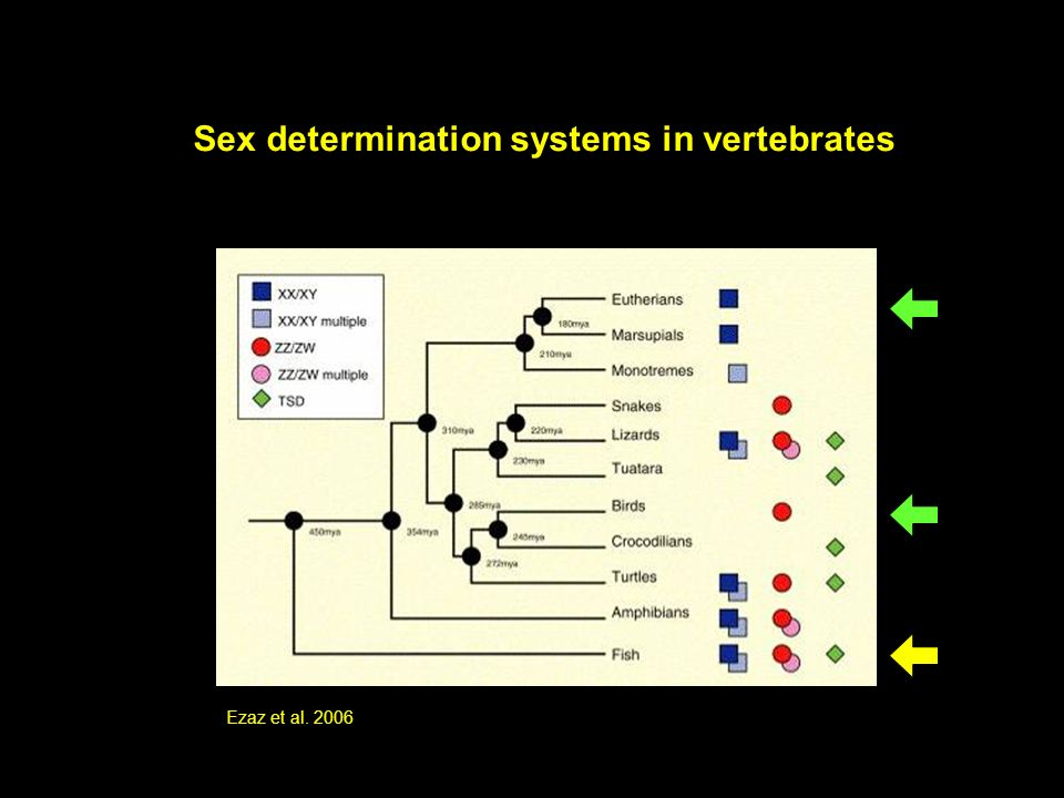 Sex determination systems in vertebrates