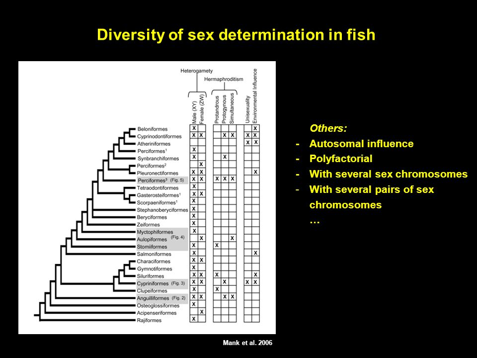Diversity of sex determination in fish