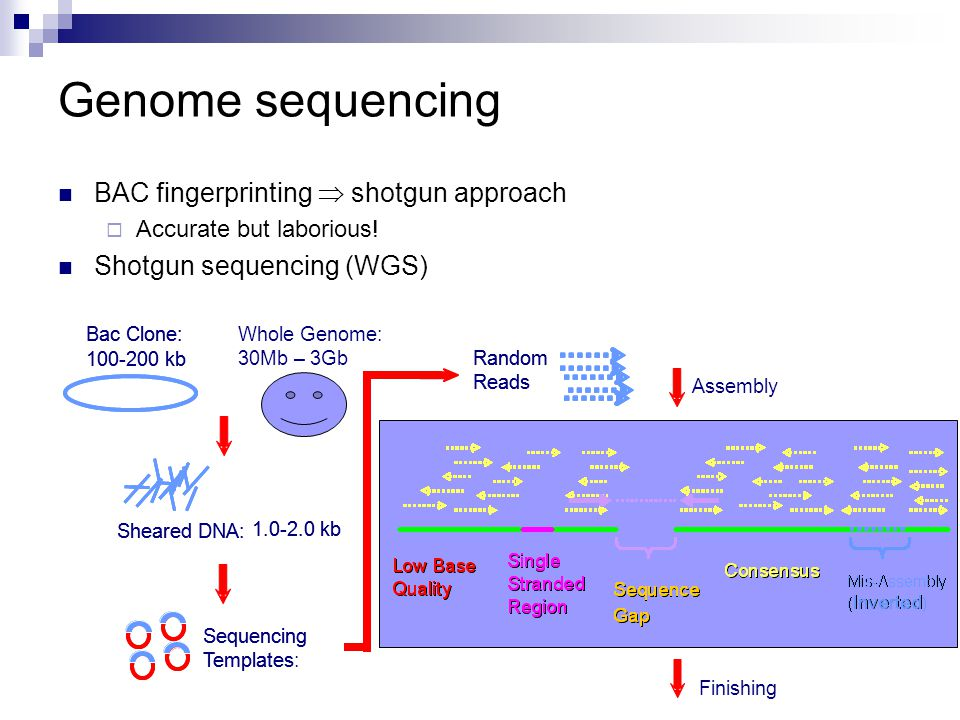 genome sequencing approaches First full genome sequencing for autism: promise for future diagnosis, prevention and treatment date in other lower resolution genome scanning approaches.