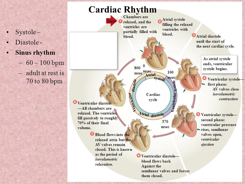 Unit II: Transport Cardiovascular System I