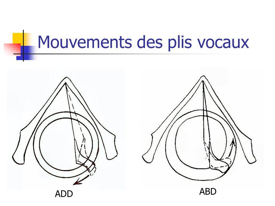 Mouvements des plis vocaux